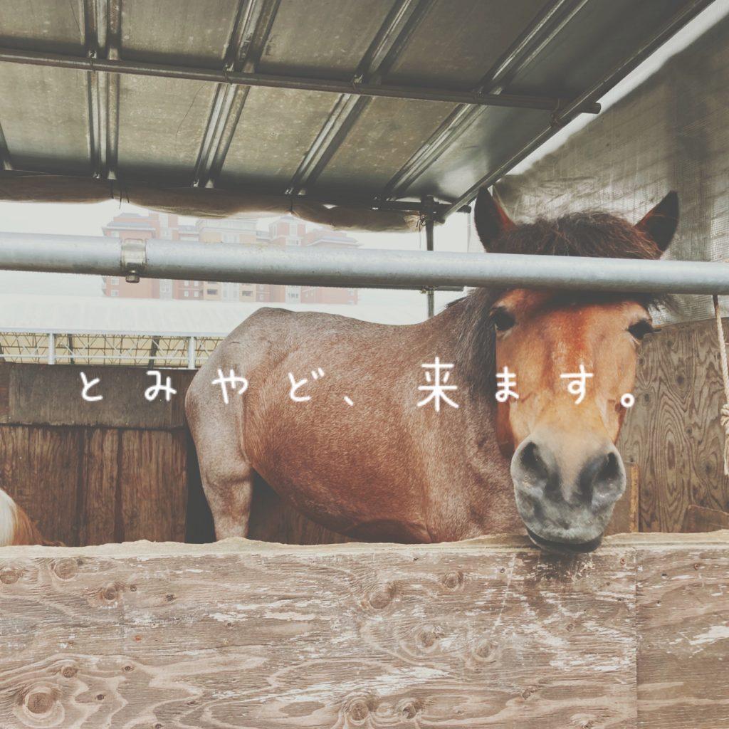 馬とのふれあい体験 in とみやど<7月25日>